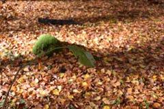 sikt av det förstörda gröna bladet Royaltyfria Foton