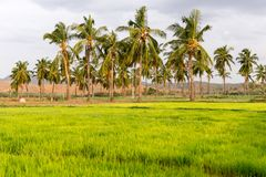 Sikt av det indiska lantliga landskapet, Puttaparthi, Andhra Pradesh, Indien Kopiera utrymme för text Arkivbilder