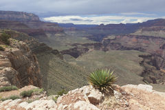 Sikt av det inre grandet Canyon Royaltyfri Fotografi