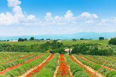 Sikt av det lavendelfältet och landskapet bakom Arkivfoton