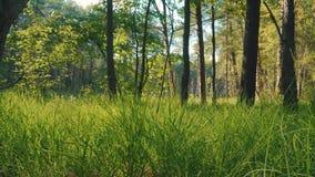 Sikt av det nya gröna gräset och träden i skogen arkivfilmer