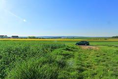 Sikt av det senapsgula fältet, Dijon, Frankrike Royaltyfria Foton