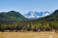 Sikt av dettäckte nord-Chuyaområdet i de Altai bergen, Sibirien, Ryssland royaltyfria bilder