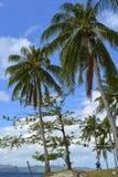 Sikt av El Nido Det är en 1st gruppkommun i landskapet av Palawan, Filippinerna royaltyfri fotografi
