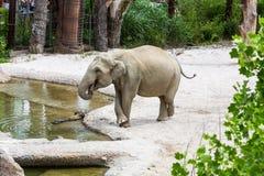 Sikt av elefanter i ny sammansättning i en zoo arkivfoton