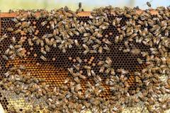 Sikt av en bikupa arkivfoton