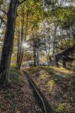 Sikt av en härlig skog arkivfoto