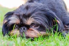 Sikt av en hund som ligger på en gräsmatta Arkivfoton