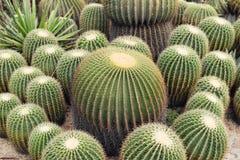 Sikt av en kaktus royaltyfri fotografi