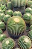 Sikt av en kaktus fotografering för bildbyråer