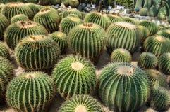 Sikt av en kaktus arkivfoto