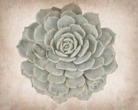 Sikt av en kaktus på papper royaltyfria foton