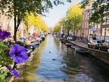 Sikt av en kanal i Amsterdam, Nederländerna royaltyfri foto
