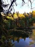 Sikt av en norsk skogsjö royaltyfria foton