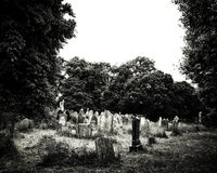 Sikt av en over fullvuxen kyrkogård Arkivfoton