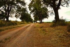 Sikt av en scenisk väg för härligt land med mogna körsbärsröda träd Near fält för körsbärsröd gränd, bygdplats i sommartid, Slova Arkivbild