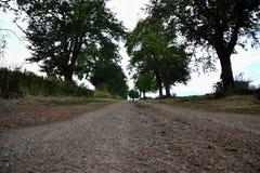 Sikt av en scenisk väg för härligt land med mogna körsbärsröda träd Near fält för körsbärsröd gränd, bygdplats i sommartid, Slova Arkivfoto