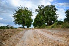 Sikt av en scenisk väg för härligt land med mogna körsbärsröda träd Near fält för körsbärsröd gränd, bygdplats i sommartid, Slova Fotografering för Bildbyråer