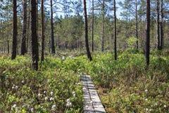 Sikt av en skog i Finland royaltyfri fotografi