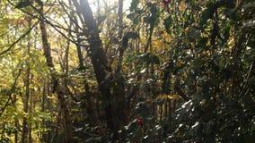 Sikt av en skog med solen som kommer till och med träden arkivfilmer