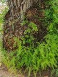 Sikt av en stam med många gröna forsar royaltyfri fotografi