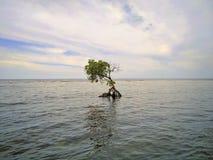 Sikt av en strand i bali, indonesia Arkivfoto