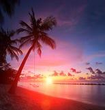 Sikt av en strand med palmträd och gunga på solnedgången, Maldiverna Royaltyfria Bilder