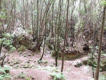 Sikt av en tät skog Arkivfoton