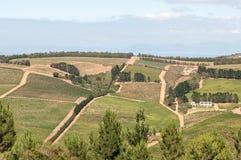 Sikt av en vinlantgård nära Sir Lowrys Pass Royaltyfri Bild