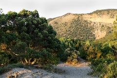 Sikt av enskogen och berg i sommarsolnedgång Royaltyfri Bild