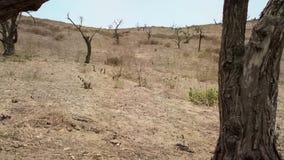 Sikt av ett ökenlandskap som totalt är i avsaknad av all vegetation royaltyfria bilder