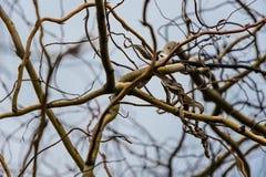 Sikt av ett branchy träd Fotografering för Bildbyråer