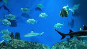 Sikt av ett djuphavs- akvarium med många sväva fisk, ormar, hajar och morayålar Undervattens- havsvärldsbakgrund lager videofilmer