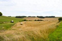 Sikt av ett fält av baler av sugrör Arkivfoto