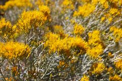 Sikt av ett fält av gula blommor på en solig dag royaltyfria bilder