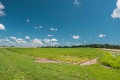 Sikt av ett fält i Illinois landssida Arkivbild