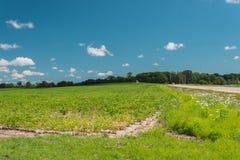 Sikt av ett fält i Illinois landssida Royaltyfri Fotografi