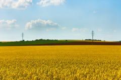 Sikt av ett gult fält av rapsfröt med grönt gräs och träd, w arkivbilder
