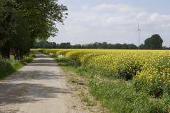 Sikt av ett härligt fält av ljus gul canola Arkivfoto