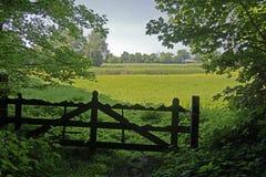 Sikt av ett härligt fält av ljus gul canola Royaltyfria Foton