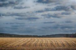 Sikt av ett harvessted vetefält royaltyfri bild