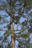 sikt av ett träd och en flock av duvor royaltyfri fotografi