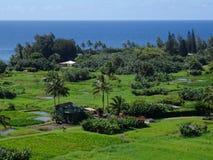 Sikt av fält för en lantgård i Maui arkivfoton