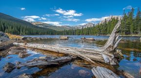 Sikt av Finch Lake och Rocky Mountains i bakgrund royaltyfri bild