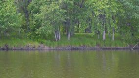 Sikt av floden eller sjön stock video