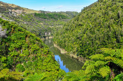 Sikt av floden i den Whanganui nationalparken, Nya Zeeland Arkivbilder
