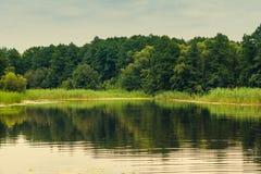 Sikt av floden på skogbakgrunder Arkivfoto
