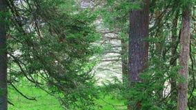 Sikt av floden till och med träden lager videofilmer