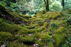 Sikt av frodig grön mossa, laven, växten, träd och torkade sidor I Royaltyfri Fotografi