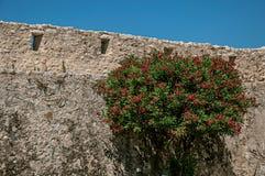 Sikt av gränden med stenväggen och den blommiga busken i Helgon-Paul-de-Vence Arkivbild